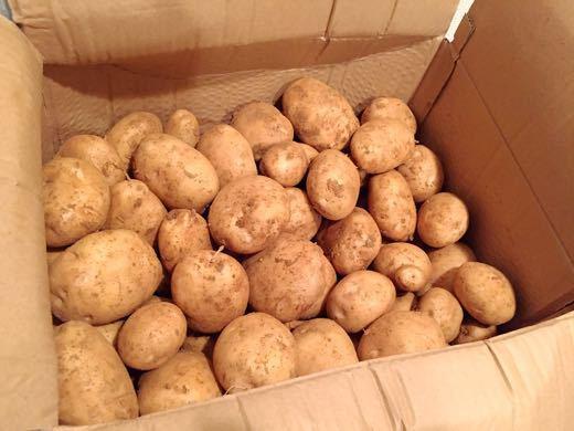 恵実菜園産馬鈴薯